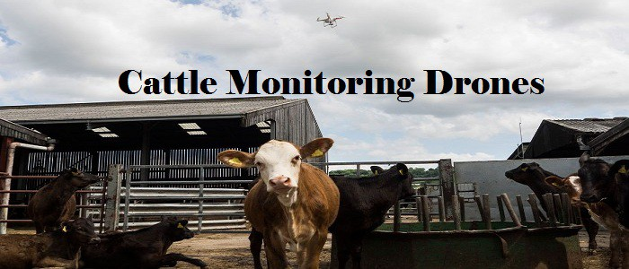 Cattle Monitoring Drones