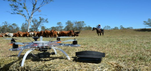 cattle surveillnace drones