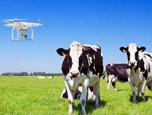 Monitoring Livestock