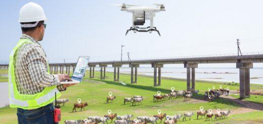 Drones For Livestock Management
